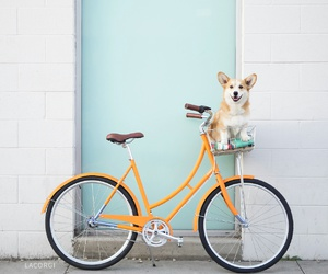 dog, animal, and bike image