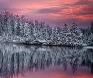 beautiful, frozen, and trees image