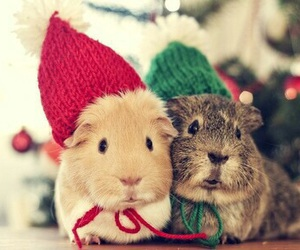 cute, christmas, and animal image