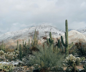 nature, cactus, and mountains image