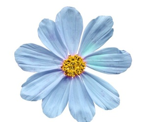 overlay, blue, and flowers image