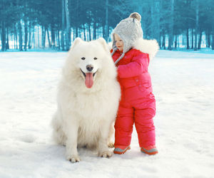 animal, dog, and snow image