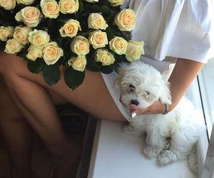dog, puppy, and fashion image