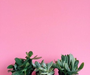 pink, plants, and cool image