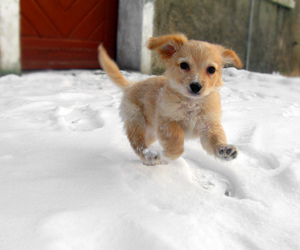 09, cute, and dog image
