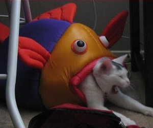 cat, funny, and fish image