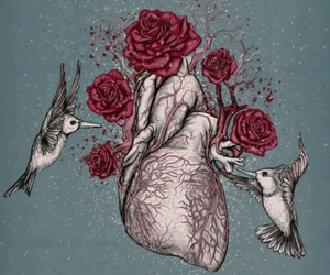 anatomy, birds, and heart image