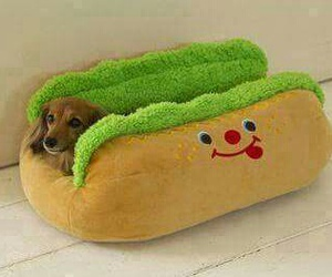 dog, cute, and hot dog image