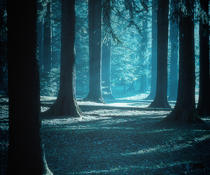 forest, blue, and nature image