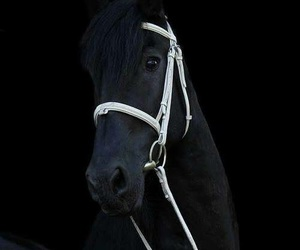 horse, black, and black beauty image