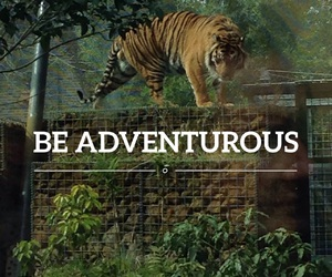 adventure and tiger image