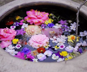 flowers, water, and pink image