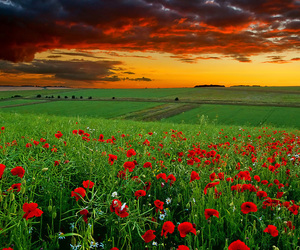 fields, nature, and flowers image
