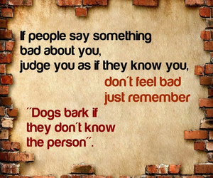 dogs, judge, and people image