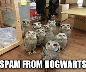 hogwarts, harry potter, and owl image