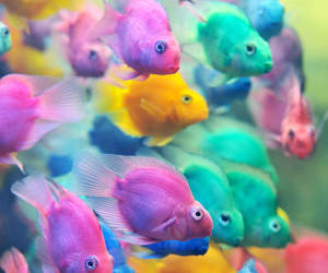 fish, colorful, and colors image