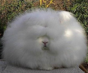 fluffy, bunny, and funny image