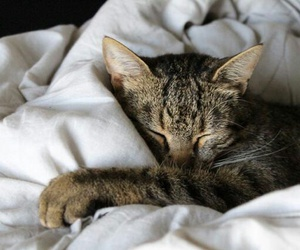 cat, cocooning, and cute image