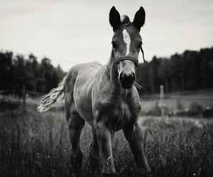 Image by horsemotivatione