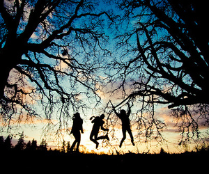 tree, beautiful, and sunset image