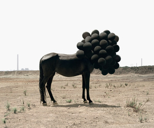 horse, black, and balloons image