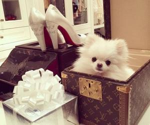 dog, Dream, and fashion image