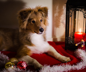 candle, christmas, and lovely image