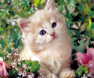kitten, cat, and flowers image