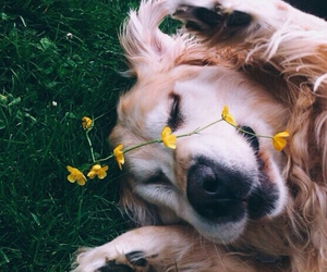 animals, flower, and hapiness image