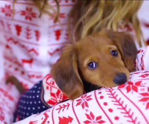 dog, piper, and christmas sweater image