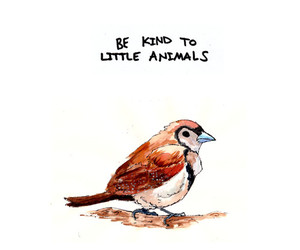 animal, bird, and quotes image