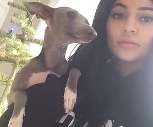 bambi, dog, and kim kardashian image