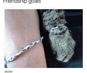 cat and goals image