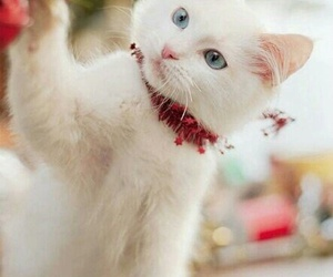 cat, christmas, and white image