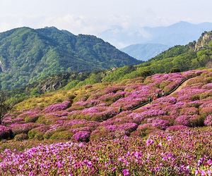 asia, blossom, and landscape image