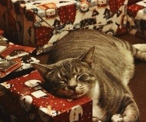 cat, christmas, and present image