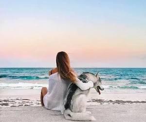 dog, beach, and summer image