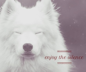 dog, enjoy, and silence image