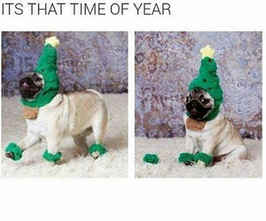 christmas, dog, and funny image