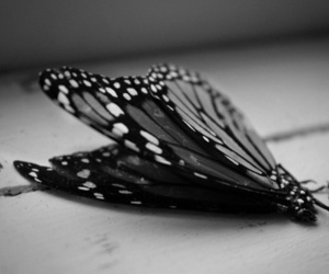 butterfly, b&w, and black and white image