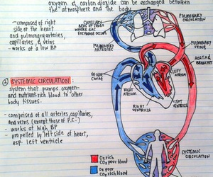 anatomy, biology, and drawing image