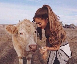 ariana grande, ariana, and cow image