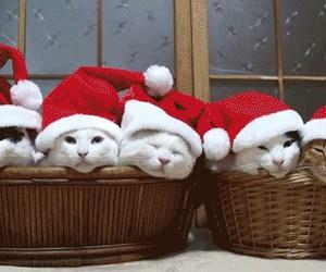cat, christmas, and gif image