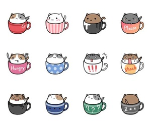 cup and cat image