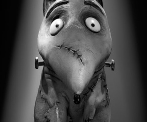 frankenweenie, tim burton, and dog image