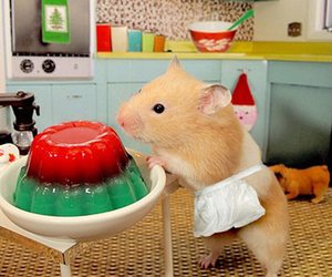 hamster and kitchen image