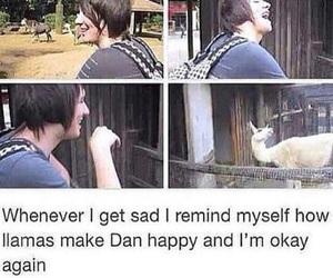 dan, llamas, and dan and phil image