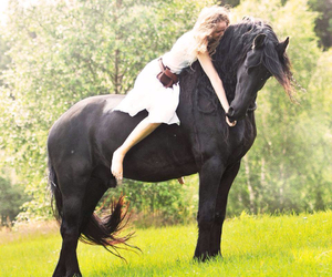 beautiful, black, and black horse image