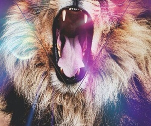 lion, animal, and hipster image