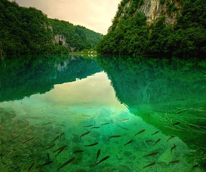 nature, fish, and green image